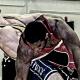 Ryan Hope, USA Greco Roman wrestling, 85 kg